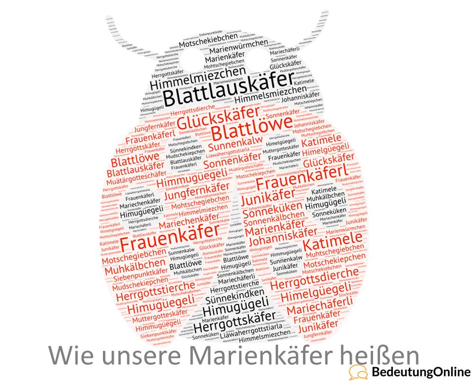 Synonyme Marienkäfer: Welche Namen sie tragen