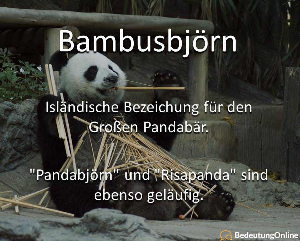 Bambusbjörn: Bedeutung, Definition, Wortherkunft