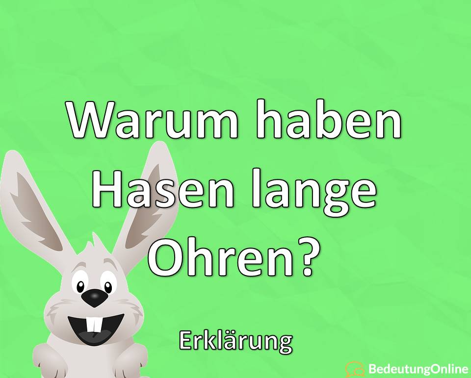Warum haben Hasen lange Ohren? Erklärung