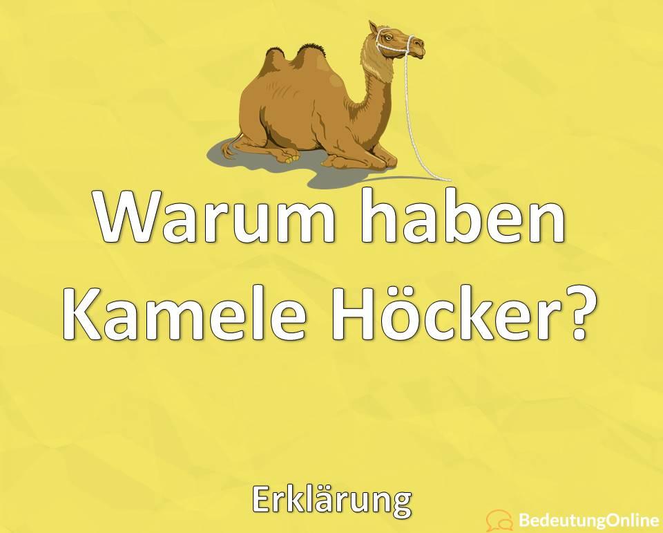 Warum haben Kamele Höcker, Erklärung