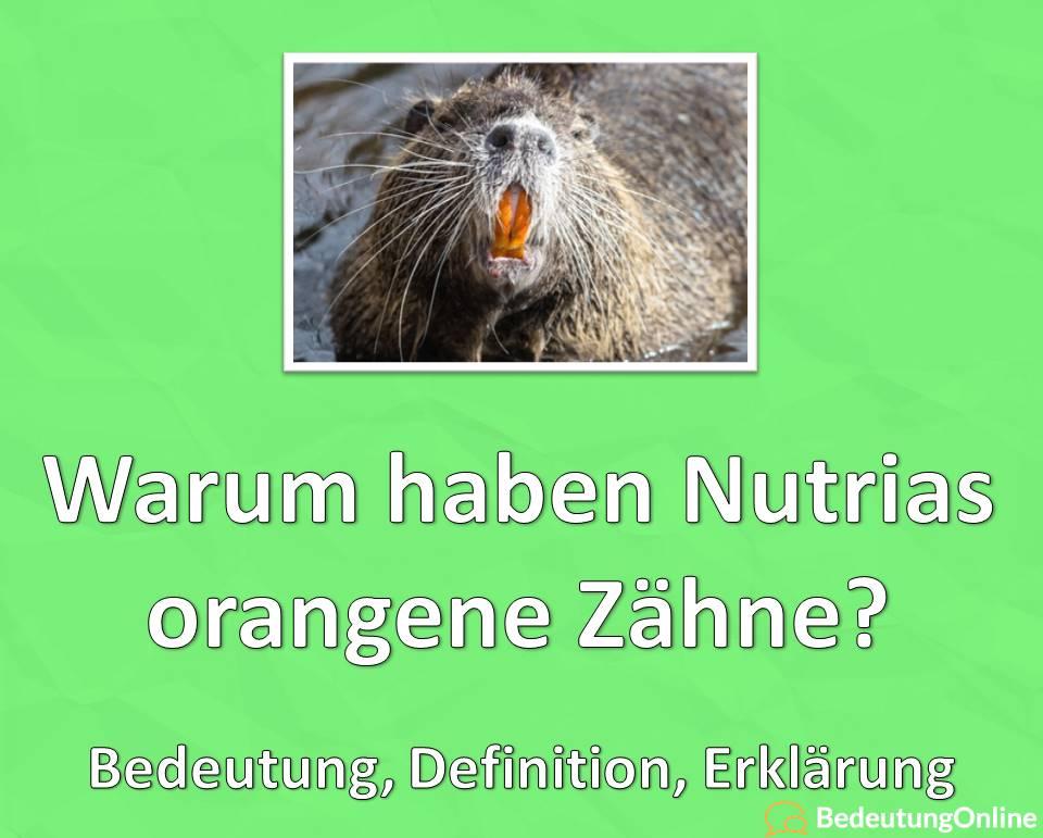 Warum haben Nutrias orange Zähne? Erklärung