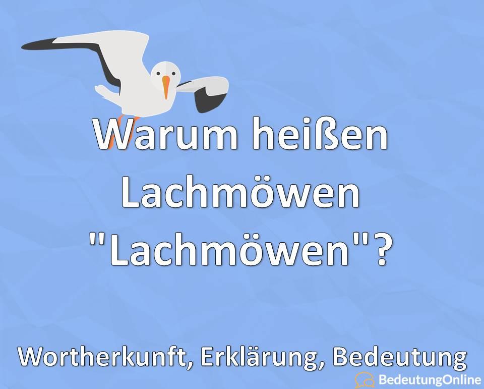 Warum heißen Lachmöwen Lachmöwen, Wortherkunft, Erklärung, Bedeutung_