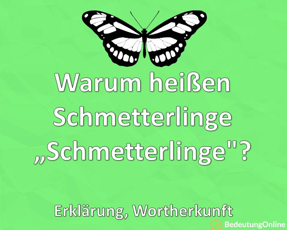 """Warum heißen Schmetterlinge """"Schmetterlinge""""? Erklärung, Wortherkunft"""