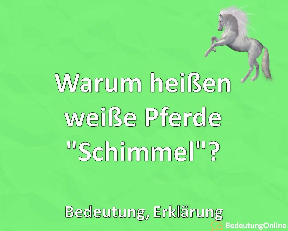 """Warum heißen weiße Pferde """"Schimmel""""? Erklärung, Bedeutung"""