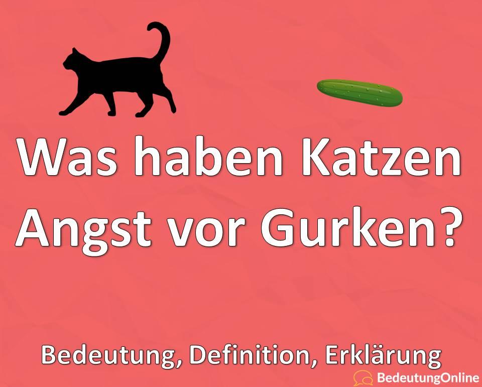 Was haben Katzen Angst vor Gurken, Bedeutung, Definition, Erklärung