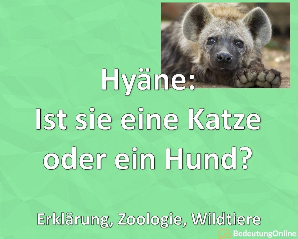 Hyäne: Ist sie eine Katze oder ein Hund? Erklärung, Zoologie, Wildtiere