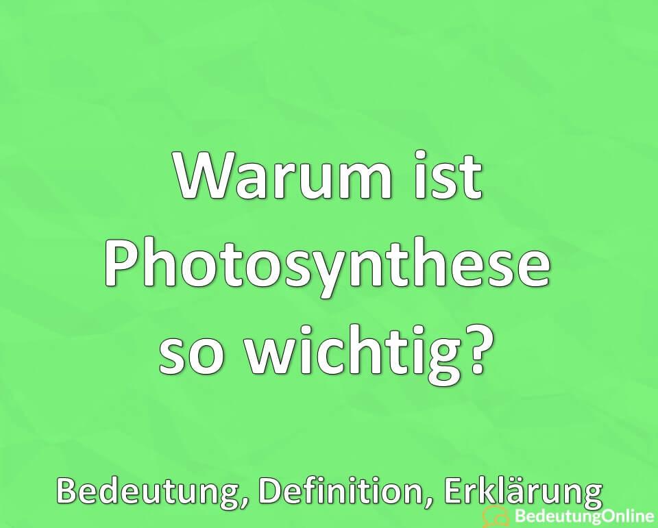 Warum ist Photosynthese wichtig? Bedeutung, Definition, Erklärung