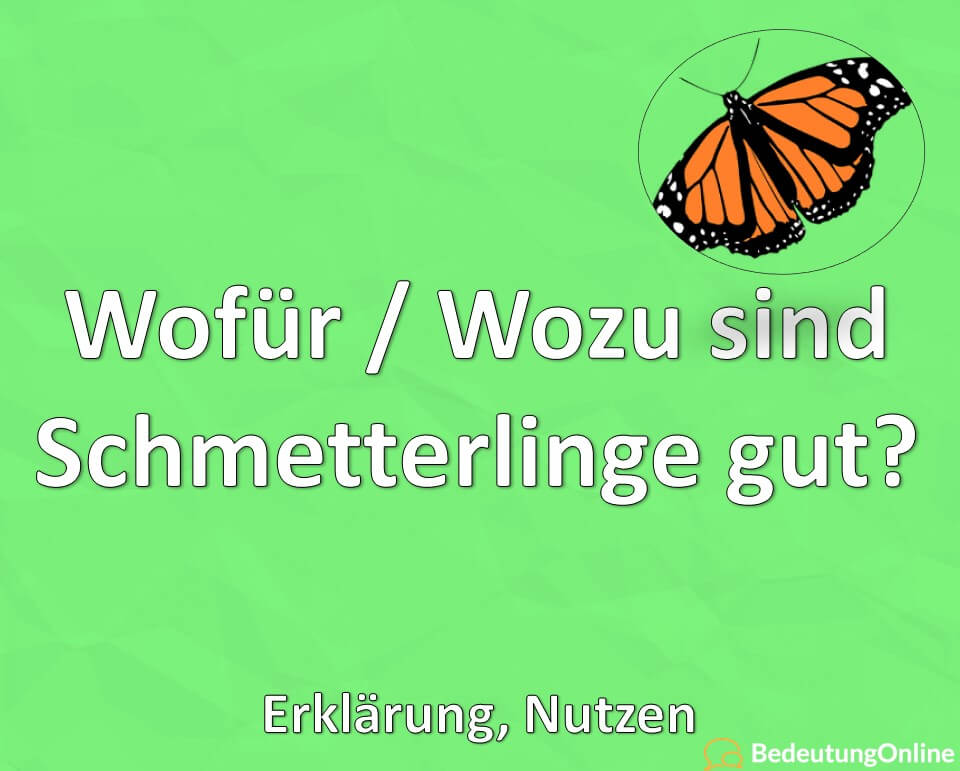 Wofür / Wozu sind Schmetterlinge gut? Erklärung, Nutzen