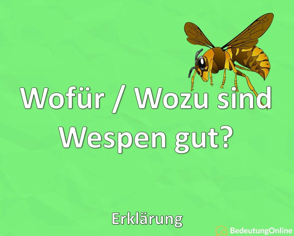 Wofür / Wozu sind Wespen gut? Nutzen, Erklärung